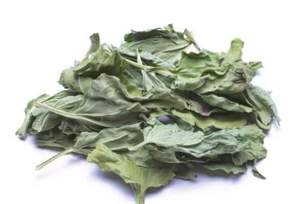 Tisane de plantain bio quebec